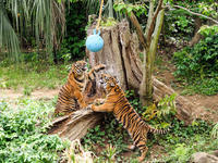 よこはま動物園ズーラシア 5月13日の1 - お散歩ふぉと