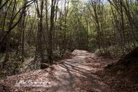 花を探して山歩きⅡ@岡山県立森林公園 - Little Sneakers