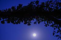 満月r - 雲空海