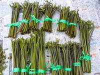 山菜採り - 里山の機織りばぁば