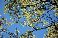 黄色と緑と青い空と。 - ◆ キョウモドコカデチドリアシ ◆