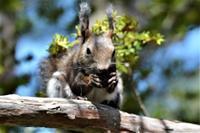 北の森からエゾリス便り - エゾリスと森の仲間たち