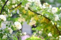 Garden Necklace YOKOHAMA 2017(8) - 今日の小さなシアワセ