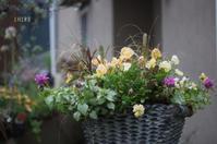 色彩の変化も楽しんで - CHIROのお庭しごと