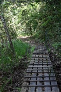 5月の森~その1 - miyabine's フォト日記2~身の周りのきれい・可愛い・面白い~