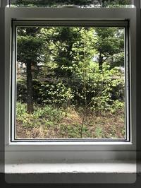 恵みの雨 - 森の扉