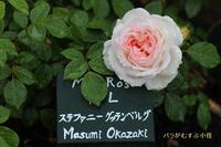 ばらがむすぶ小径(荏子田太陽公園) - 写真で残す都筑の風景