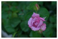 写真力。 - Yuruyuru Photograph