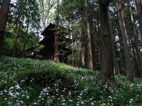 高蔵寺のシャガ - koushin Photograph &マグナ250