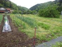 落花生、さつま芋、植付け予定地を耕作しました。 - チドルばぁばの家庭菜園日誌パート2
