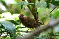 狙った鳥が - 鳥撮り日記