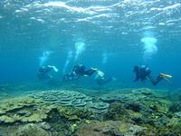 底土でサンゴ&ウミウシ!湾内泳ぎまくり(^^) - 八丈島ダイビングサービス カナロアへようこそ!