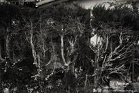 """""""a hedge"""" - ~まきち写真工房~"""