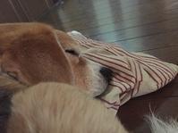 愛犬の日 - ビビリビーグル☆ケン(毎日空腹)