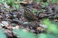 スズメの食事 - 野鳥写真日記 自分用アーカイブズ