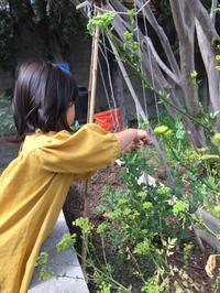 お豆さん - ロサンゼルスの日本語幼児教室 あおぞら