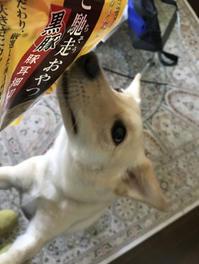 豚耳のおやつ - Kokiary@ のどかへつなぐ happy days