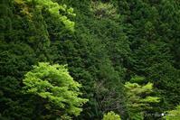 新緑の里山2017:3:村に泊まる - walk with my Camera