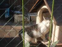 季節外れのサンタさん - 愛犬家の猫日記