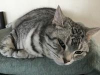 つり目ちゃん - ご機嫌元氣 猫の森公式ブログ