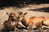 微睡みの鹿 - ある日の足跡