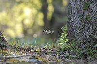 過ぎ行く春 - Aruku