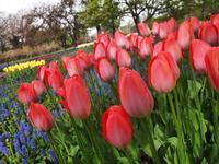 5月13日 今日の写真 - ainosatoブログ02
