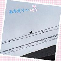 ☆ツバメちゃん、おかえり☆ - のんびりamiの日記
