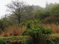 5月14日 雨 山は緑に - 日々GILIGILI