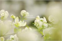 '17 春のお花*Ⅱ - It's only photo