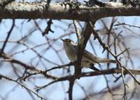 夏鳥の少ない高原で、、 - ぶらり探鳥
