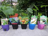 夏野菜の植え付け続く。。 - 家庭サイエニストabuさん家の美味あれこれ