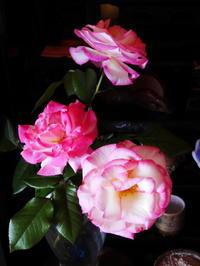サプライズな母の日のプレゼント - AppleRose