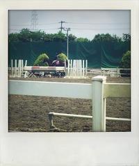 馬が合う。 - Quality Of Life??