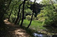 5月の森~その2 - miyabine's フォト日記2~身の周りのきれい・可愛い・面白い~