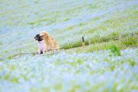 # 青い花が咲く散歩道 - Green+Pink