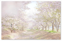 新しい私はじまる・・・  new start 圧倒的桜。2017 - Yuruyuru Photograph