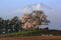 2017 東北桜紀行-上米内- - さんたの富士山と癒しの射心館