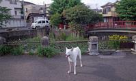ぽんぽん - 小太郎の白っぽい世界