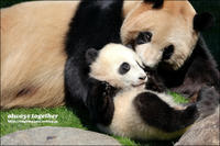 お母さん、いつも一緒だよ - 和む由もがな