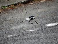 子育ての時期 - 西多摩探鳥散歩