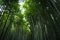 竹林の道(京都嵯峨野) - お茶にしませんか