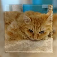 おやすみ「キングとマロニー」 - わたしの写真箱 ..:*:・'°☆
