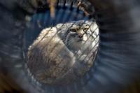 斜め縞のネコ - 動物園へ行こう
