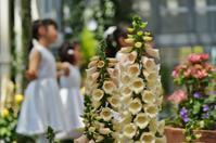 奇跡の星の植物館(1)アラビアの薔薇 - たんぶーらんの戯言