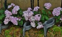 奇跡の星の植物館(3)「和」の花々 - たんぶーらんの戯言