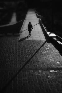 くつろぎの道 - haze's photos