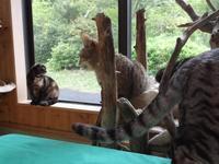 オール讀物「猫の〈物語〉」 - ネコと文学と猫ブンガク