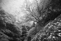 石楠花の山 - ぽとすのくずかご