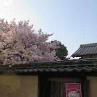 西大寺を北に歩いて行くと - 新世界遺産への道~他とは違うちょっとした苦味~